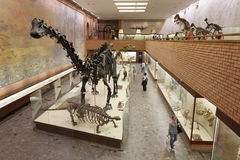 Skeletons of dinosaurs at Moscow Paleontological Museum 20.08.20 Royalty Free Stock Images