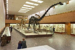 Skeletons of diplodocus at Moscow Paleontological Museum 20.08.2. MOSCOW, RUSSIA - AUGUST 20, 2017: Skeletons of dinosaurs at Paleontological Museum. Large dark Royalty Free Stock Photo