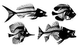 Skeletons of fishes. Royalty Free Stock Images