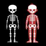 Skeletons Human Bones Set. Cartoon Style. Vector Stock Photo