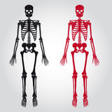 Skeletons - human bones set Stock Photography