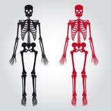 Skeletons - human bones set. Eps10 Stock Photography