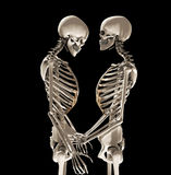 Skeletons In Love. Two skeletons in a loving romantic pose Stock Images