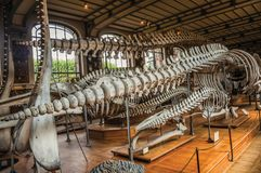 Skeletons of marine mammals at hall in Gallery of Paleontology and Comparative Anatomy at Paris. Paris, northern France - July 10, 2017. Skeletons of marine stock photos