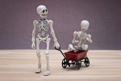 Skeletons Royalty Free Stock Photo