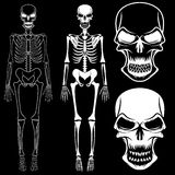 Skeletons and skulls. Set of skeletons and skulls art Stock Photo