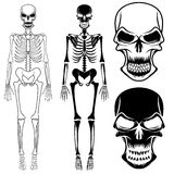 Skeletons and skulls. Set of skeletons and skulls art Stock Photography