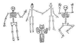 Skeletons Stock Photos