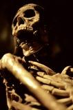 skelett Royaltyfria Bilder