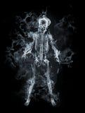 Skelett Lizenzfreie Stockbilder