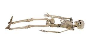 skelett Arkivfoto