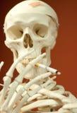 Skelett Stockfoto
