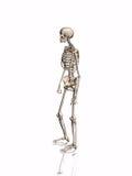 Skelett. stock abbildung