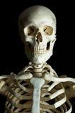 skelett 2 Arkivbilder
