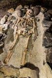 skelett stockbilder