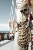 skelett Lizenzfreie Stockfotos