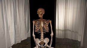 Skelett auf dem Stadium L lizenzfreies stockfoto