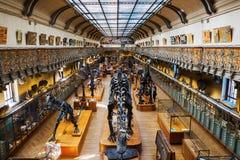 Skelett av djur i gallerit av Palaeontology och komparativanatomi i Paris royaltyfri bild