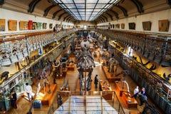 Skelett av djur i gallerit av Palaeontology och komparativanatomi i Paris royaltyfria foton