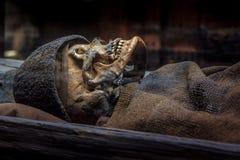 Skelett av en man för bronsålder i en jordfästningkulle royaltyfria bilder