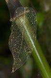 Skelett av en riden ut leaf Arkivbild