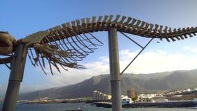Skelett av ett val på nordliga Tenerife lager videofilmer