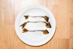 Skelett av fisken på en platta Arkivbild