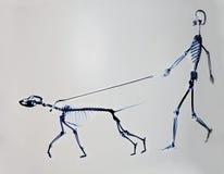 Skelett av hunden och mannen Arkivfoto