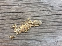 skelett av reptilen Arkivfoto