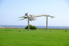 Skelett av spermavalet Morro Jable, Fuerteventura, Spanien - 17 02 2017 Arkivfoton