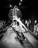 Skelett av T-Rex Royaltyfri Bild