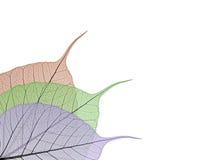 skelett- dekorativa leaves Arkivfoton