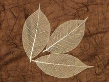 skelett- dekorativa leaves Arkivbild