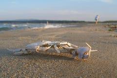 Skelett der Befestigungsklammer auf Strand Lizenzfreies Stockfoto