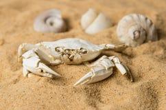 Skelett der Krabbe und der Muscheln auf Sand Stockfotografie