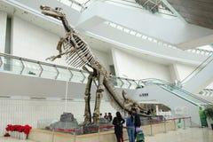 Skelett des Dinosauriers stockbild