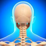 Skelett des menschlichen Kopfes im Blau Lizenzfreie Stockfotos