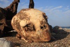 Skelett einer toten reißenden Schildkröte Stockfoto