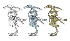 Skelett eines Vogels Stockfotos