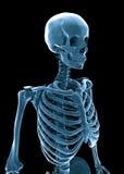 skelett för human 3d royaltyfri illustrationer