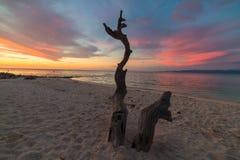 Skelett- flätad trädstam med romantisk färgrik solnedgång på stranden av Tanjun Karang, centrala Sulawesi, Indonesien Bred vinkel Arkivfoton