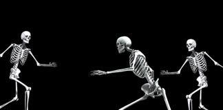 Skelett- grupp 2 Arkivbilder
