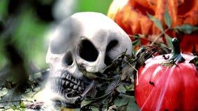 Skelett- huvud med halloween pumpor arkivfilmer
