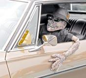 Skelett i bil Royaltyfria Bilder