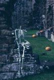 Skelett i gammal abbotskloster Royaltyfri Foto
