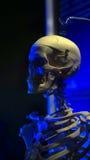Skelett i läskiga blåa ljusa halloween Arkivbilder