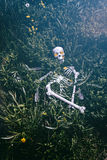 Skelett im Gras 3 Stockbild