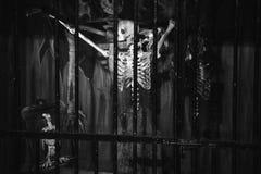Skelett im Kerker stockfotos