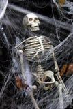 Skelett im Web stockfotos