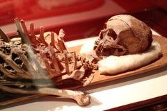 Skelett in Istanbul stockfotos